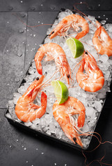 Half Dozen Cooked Pink Shrimp or Prawns Chilling with Slices of Lime on Tray Filled With Ice