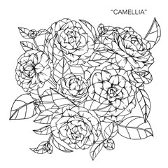 Bouquet of camellia flowers drawing.