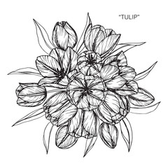 Bouquet of Tulip flowers drawing.