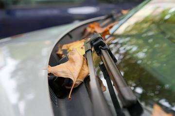 Heruntergefallene Blätter auf der Frontscheibe im Herbst