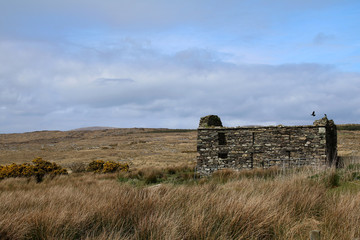 Old stone house in the field, Ireland