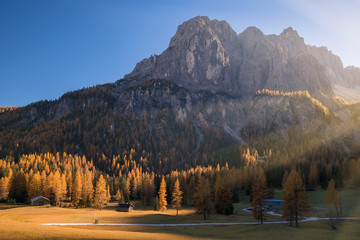 Incredible view of yellow larches illuminated by the rising sun. Alta Badia, Dolomite Alps, Italy