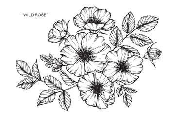 Wild rose flower drawing.