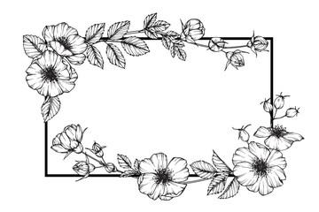Wild rose flower fame drawing.