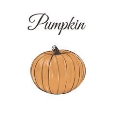 pumpkin is orange. Vector illustration of a pumpkin