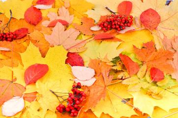 Printed kitchen splashbacks Beige Autumn background with yellow and