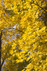 Vertical Background with Autumn Foliage