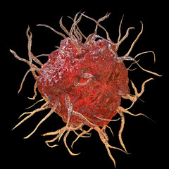 Dendritic cell, antigen-presenting immune cell isolated on black background, 3D illustration