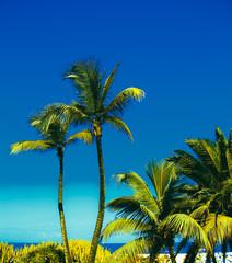 Canary Islands. Paradise. Tropical Minimal