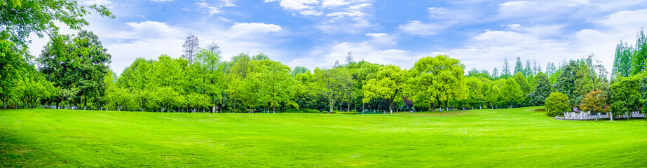 Foto op Canvas Lime groen Park green trees