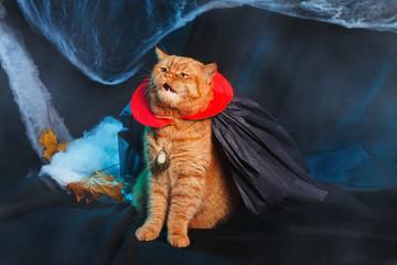 Cat vampire on black background. Halloween theme.