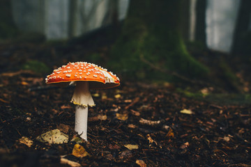 poisonous mushroom in a fairy forest