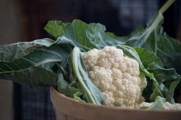 fresh picked cauliflower in a basket