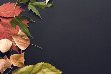 Autumn background. Fall. Multicolored autumn leaves on a black background. Image toned in trendy color.