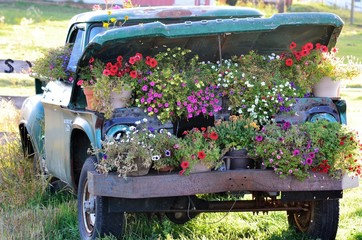 Old truck full of beautiful summer flowers !