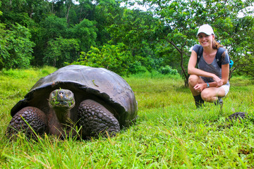 Galapagos giant tortoise with young woman (blurred in background) sitting next to it on Santa Cruz Island in Galapagos National Park, Ecuador