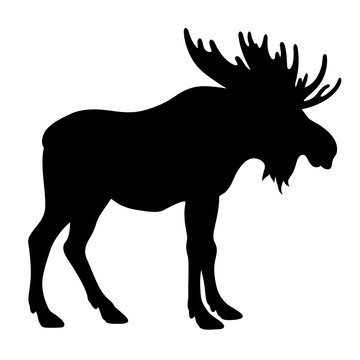 Moose silhouette 001