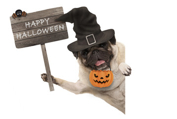 smiling pug puppy dog holding up wooden sign with happy halloween and wearing witch hat and pumpkin, isolated on white background