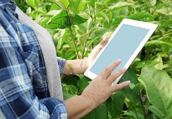 Female farmer with tablet computer in field
