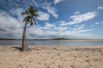 lone coconut tree on tropical island paradise