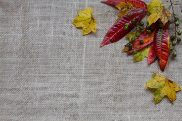 Burlap with Fall Leaves