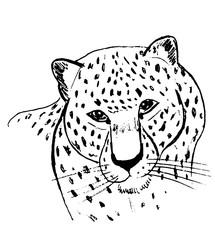 Леопард на белом фоне