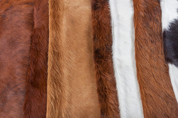 Cowhides on display, Cowhides for sale, Fur texture