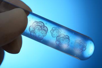 Stammzellen in Reagenzglas für Stammzellforschung