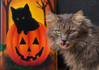 Katze mit herausgestreckter Zunge vor einem Halloween-Kürbis