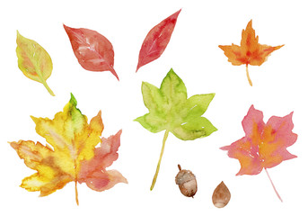 紅葉 秋の葉っぱとドングリ 水彩イラスト