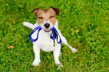 Dog holding leash in mouth waiting for walk