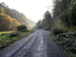 Forstweg im Nebel