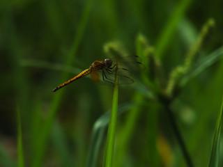 Dragonfly balancing