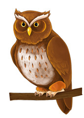 Cartoon animal - owl sitting and looking - illustration for children