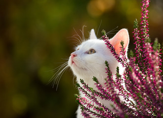 Foto op Plexiglas Kat Portrait of cute white cat in garden