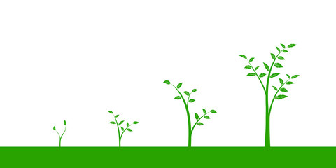 Vector illustration of a set of green icons - plant or tree growth phase, isolated