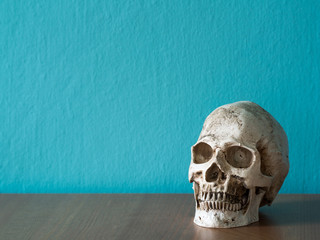 The skull is placed on a wooden table. The backdrop is blue. having copy space