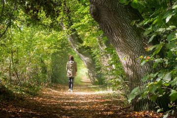 Frau macht einen sonnigen Herbstspaziergang im Wald
