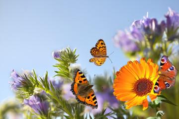 Motyle z kwiatami