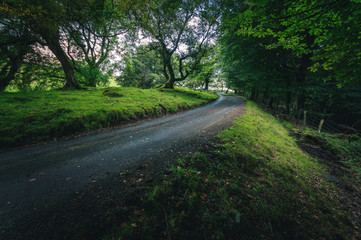 Tree lined country lane