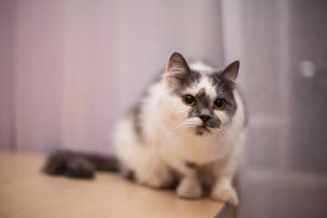 cat animal pets