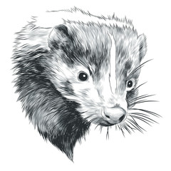 skunk sketch head vector graphics in black-and-white monochrome pattern