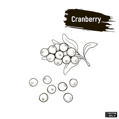 Outline berry, cranberry sketch.