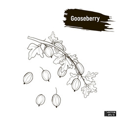 Outline berry, gooseberry sketch.