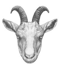 Portrait of Goat. Hand-drawn illustration.