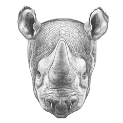Portrait of Rhinoceros. Hand-drawn illustration.