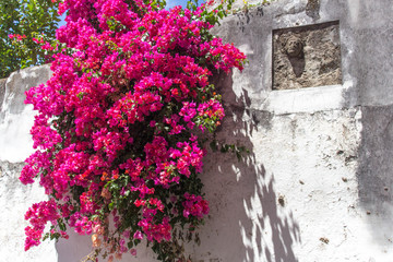 Purple flowers against a white wall in Portugal