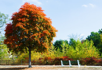 solitary tree with colorful autumn foliage next to a bench in a New England park