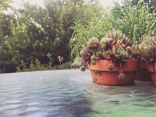 Succulents in Terracotta Planters on Glass Table Outdoors