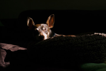 Small dog cathing the last rays of sun